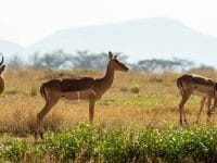 Visiter l'Afrique du Sud