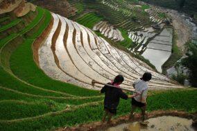 Rizieres Sapa Vietnam