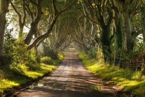 Tunnels d'arbres naturels dans le monde
