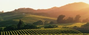 Napa Valley, Sonoma Valley, San Francisco