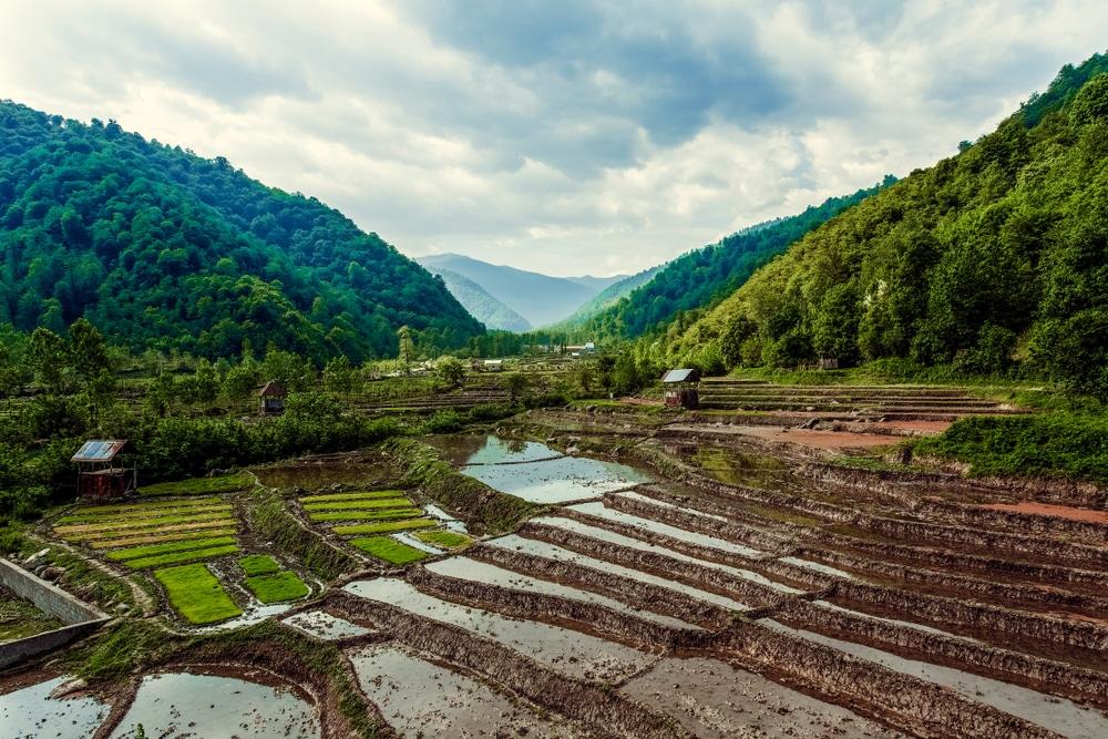 grands pays asie : Iran photo rizières