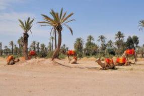 Palmeraie de Marrakech