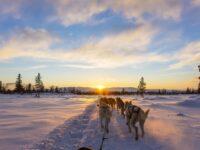 chiens de traineau rovaniemi au coucher de soleil