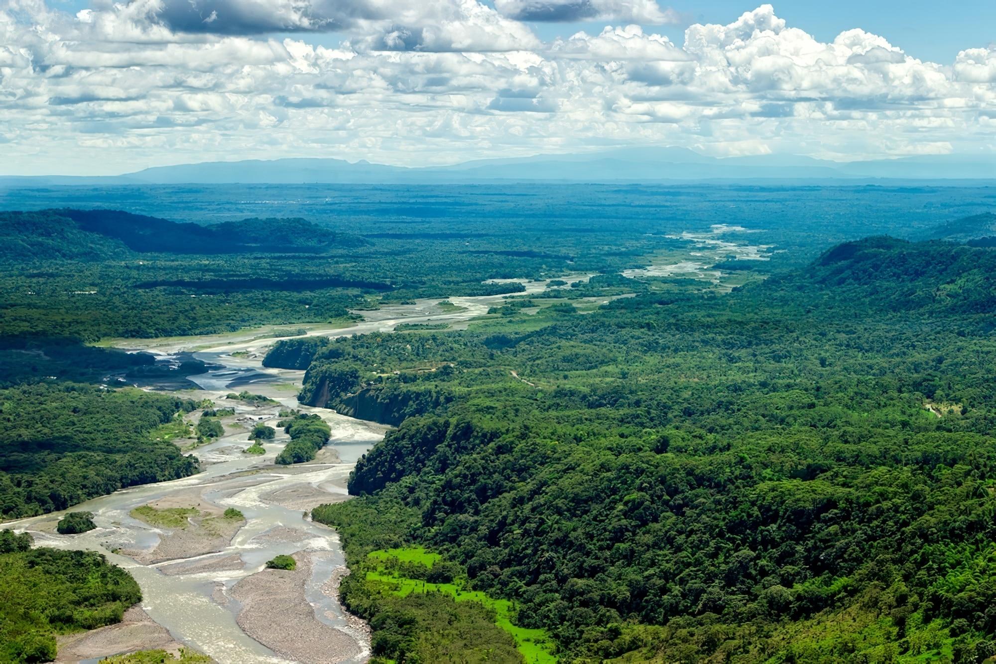 8 jungles où jouer les explorateurs