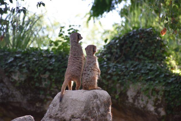 Où dormir près du parc d'attractions/zoo Le Pal