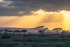 15 réserves africaines où faire un safari inoubliable