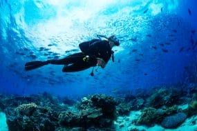 Fille plongée sous-marine plongée sur fond tropical avec fond bleu et poisson de récif
