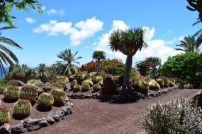Visiter l'Oasis Park