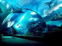 Visiter Sea Life Ocean World à Bangkok