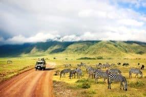 Nature sauvage de l'Afrique. Zèbres contre montagnes et nuages. Safari dans le parc national du cratère de Ngorongoro. Tanzanie.