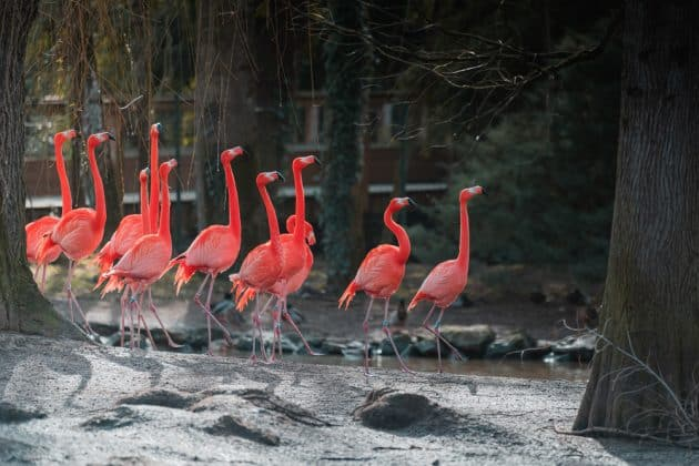 Cartes et plans détaillés du Zoo de Beauval