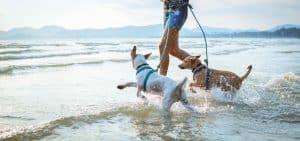 Les plages de France autorisées aux chiens