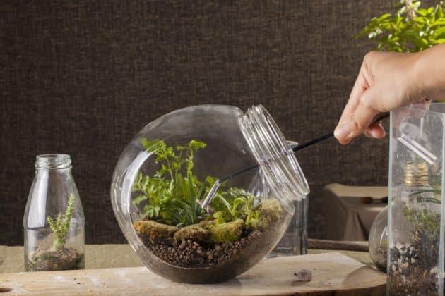 6 ateliers pour créer son terrarium à Lyon