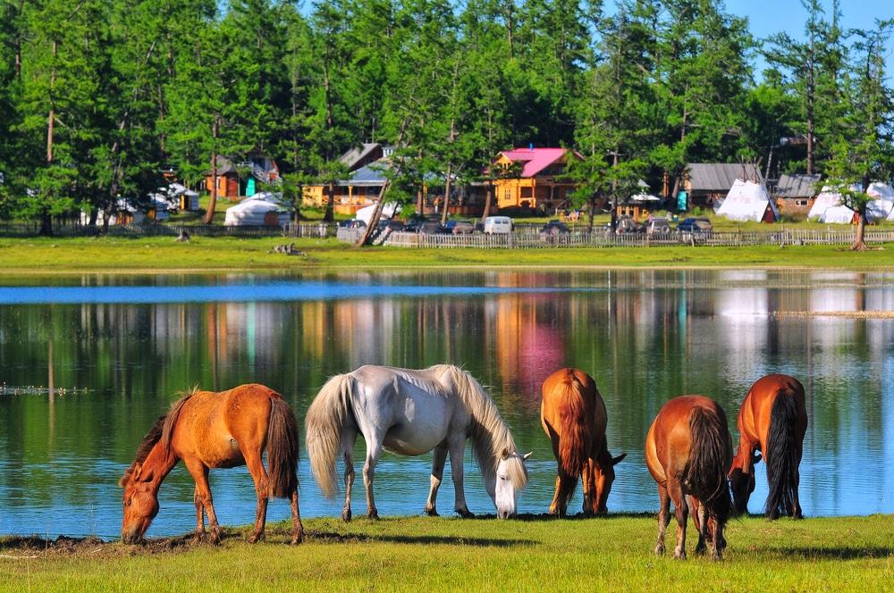 Khuvsgul lake - visiter mongolie