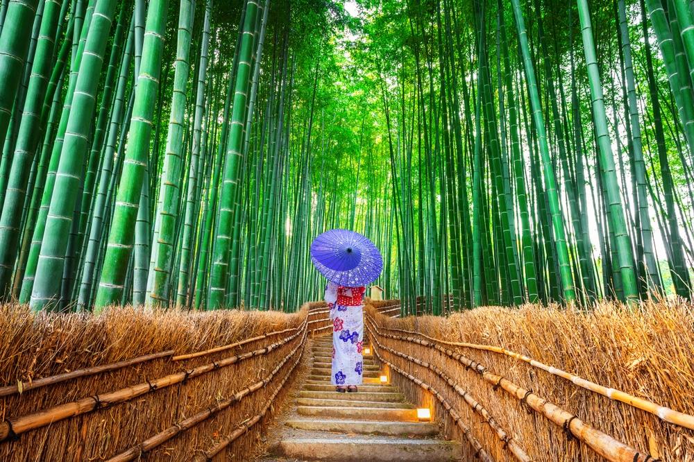 forêt de Bamboo à Kyoto - photos Japon