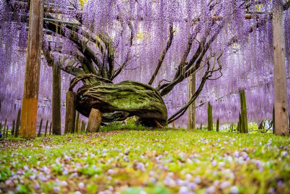kawachi touen, fukuoka - photos Japon