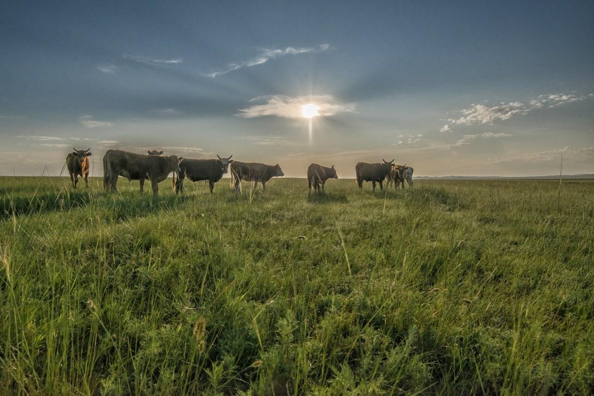 steppes mongolie