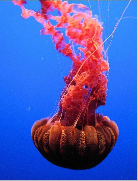 meduse13
