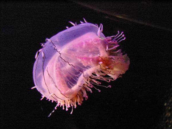 meduse3