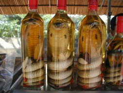 Serpent Whisky au Laos