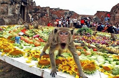 Buffet des singes à Lopburi, un festival étrange