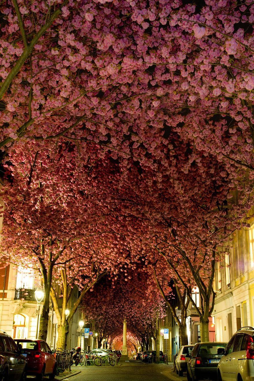 Une rue de Bonn en Allemagne
