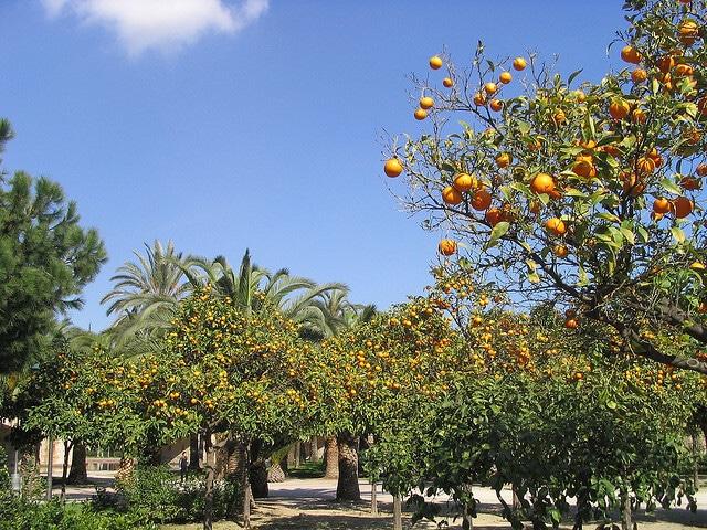 jardins du turia valence