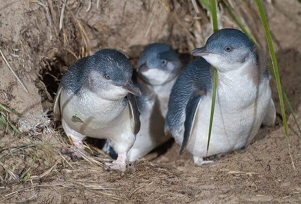 Réservation de billets pour visiter Phillip Island
