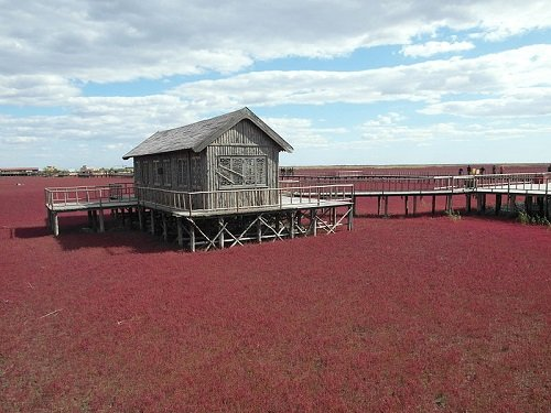 red beach panjin