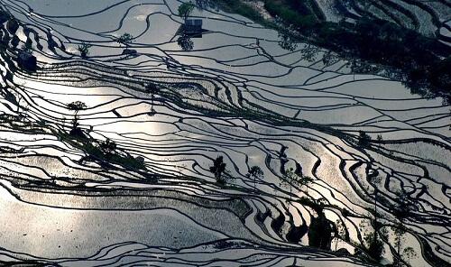rizieres en terrasses hani