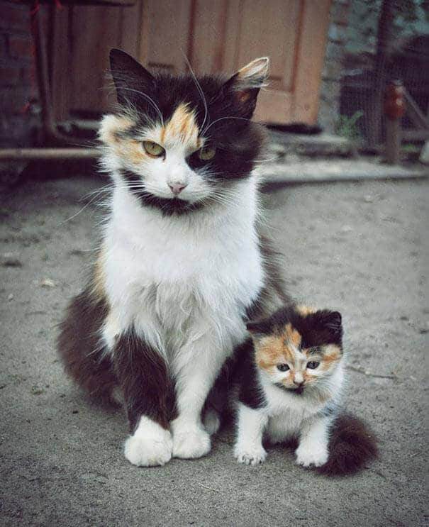 chat et châton