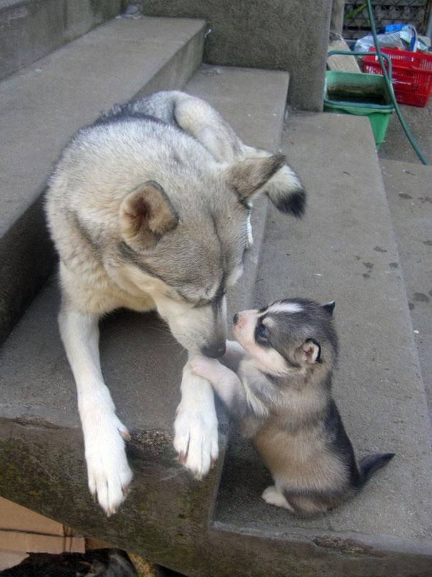 chien et son chiot