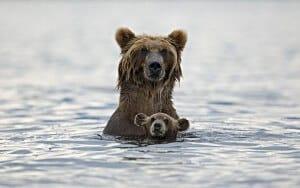 ours et son petit