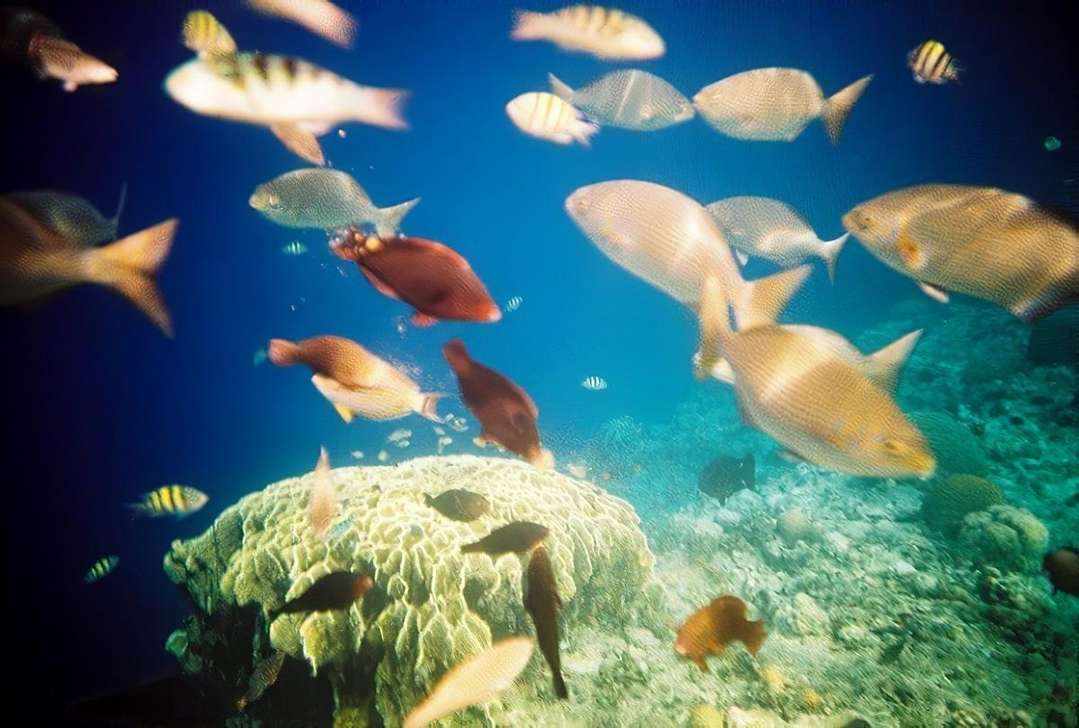 Plongée magique à Balicasag aux Philippines