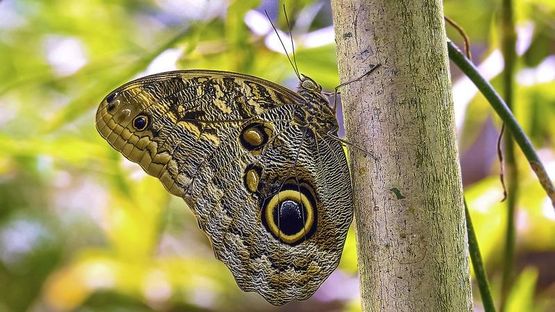 Papillons, jardins, San José