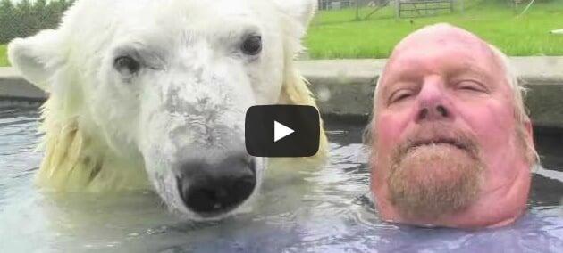 Un ours polaire domestique !