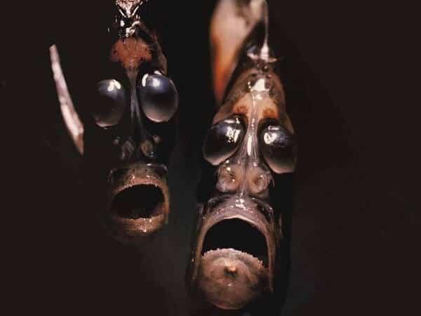poisson-hachette