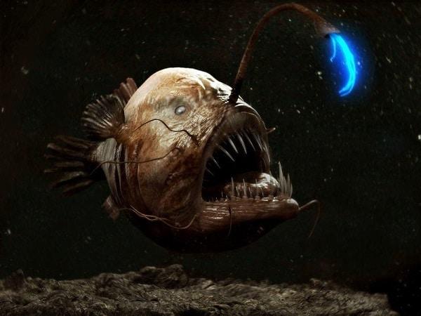 poisson-pecheur