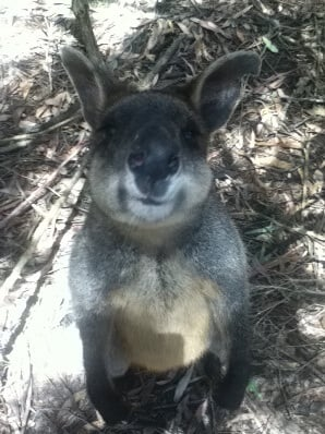 wildlife tasmania