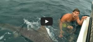 attaque requin australie