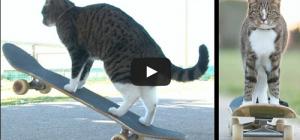 Un chat skateur nommé Didga !