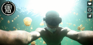 lac meduse