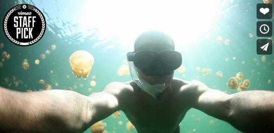 Il nage dans un lac rempli de méduses !