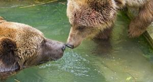 parc des ours berne