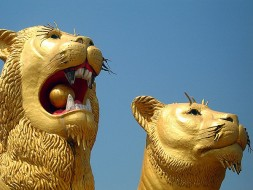 Vie nocturne Sihanoukville - Lion