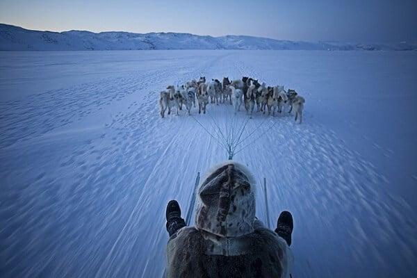 Groenland chiens de traîneaux
