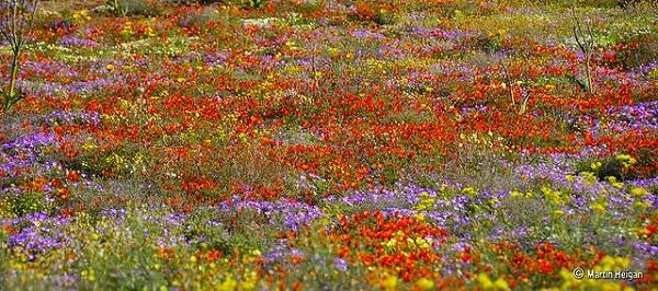 Namaqualand Afrique du Sud