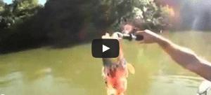 Piranhas pêche