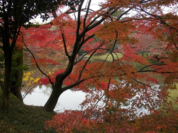 Santo Gosho Kyoto