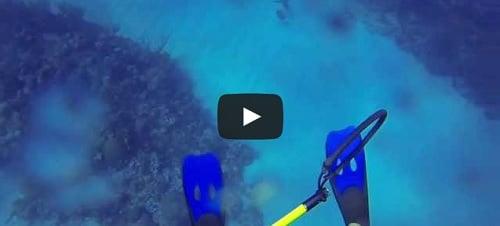 Attaque de requin sur un plongeur !